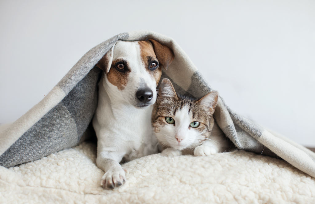 Essential Oils and Your Furry Loved Ones Universal Wellness Source